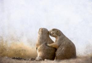 Black-tailed Prairie Dogs [Cynomys ludovicianus]