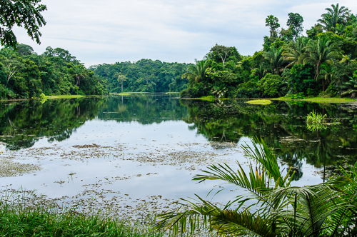 Rainforest inland lake; Soberania National Park, Panama