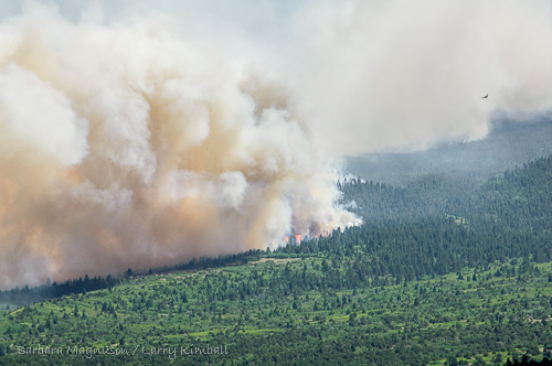 Conifers explode as the 2011 Duckett fire, a few air miles to our south, changes direction.  The fire was running south rapidly and several small ranches had been evacuated when the wind turned and pushed it north into the national forest.