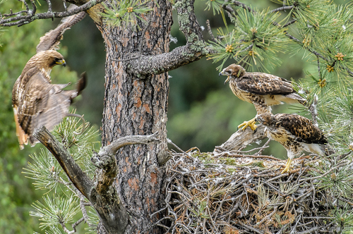 While one of the youngsters is exploring the tree above, groceries are delivered.