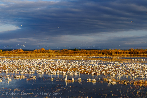 Afternoon in Bosque del Apache.