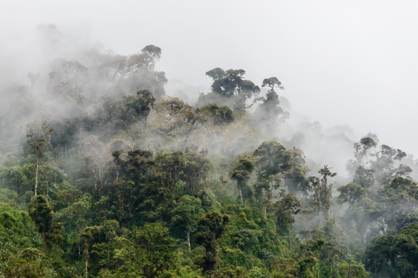 Cloud forest from guango Lodge.