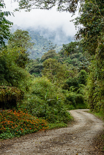 road through cloud forest