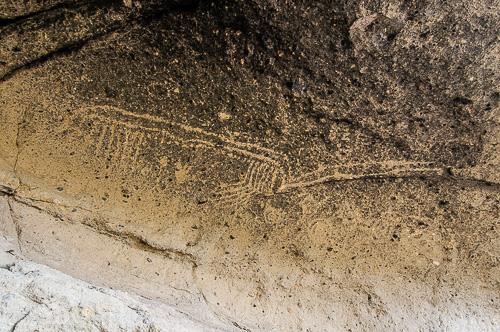 """Big Bird"" Sandhill Crane petroglyph"